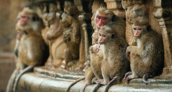 Monkey Kingdom trailer