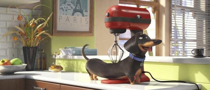 Secret Lives of Pets teaser