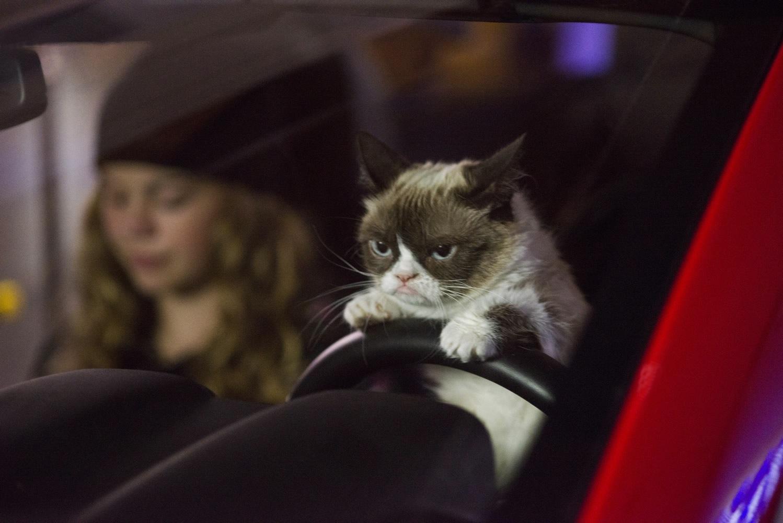 Aubrey plaza grumpy cat movie is the weirdest thing shes ever seen grumpy cat movie altavistaventures Choice Image