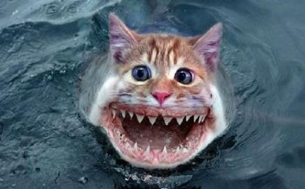cat-shark.jpg