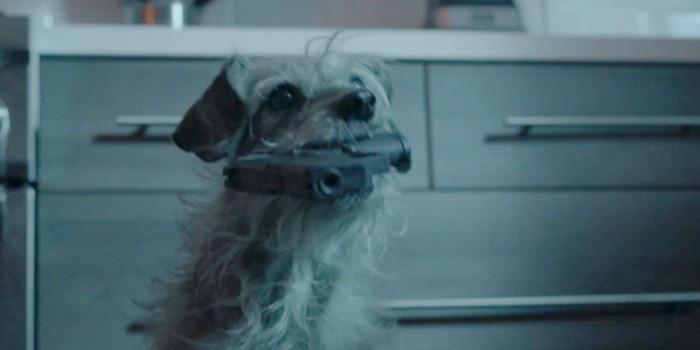 Dog Wick Trailer