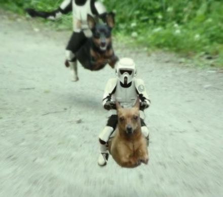 Speeder Dogs
