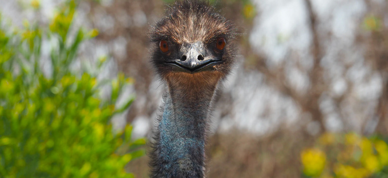 great emu war movie