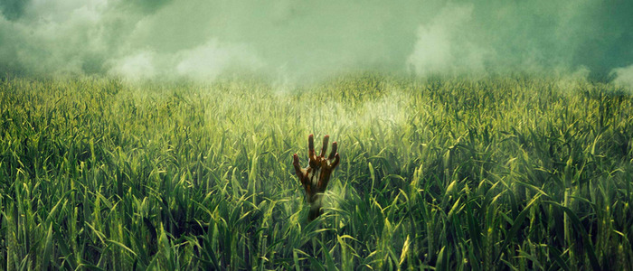 in the tall grass movie