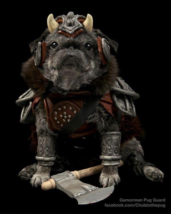Gamorrean Pug