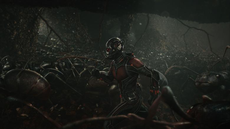 Ant-Man sequel