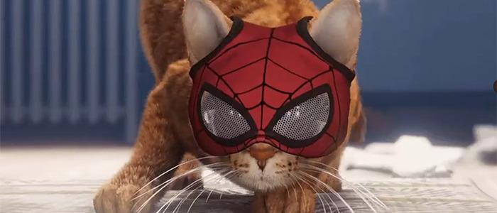 Spider-Cat Meme