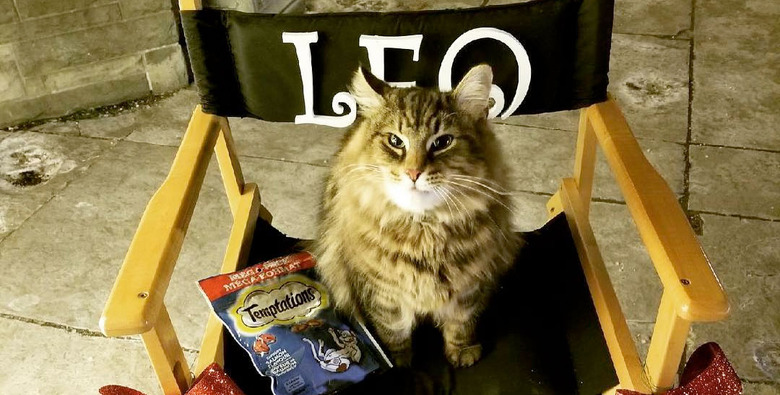 How Cats Are Trained for Movies