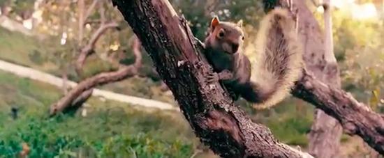squirrels-sales-trailer