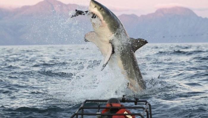 Air Jaws - Shark Week Rise