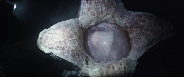 Alien Covenant Trailer Breakdown 24