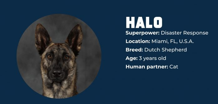 Superpower Dogs halo