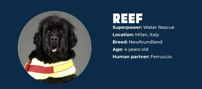 Superpower Dogs REEF