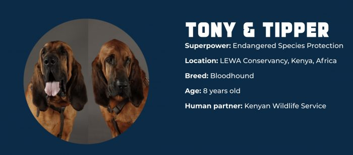 Superpower Dogs TONY & TIPPER