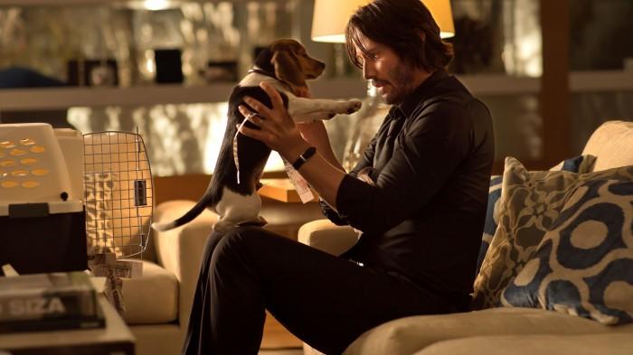 John Wick's Beagle