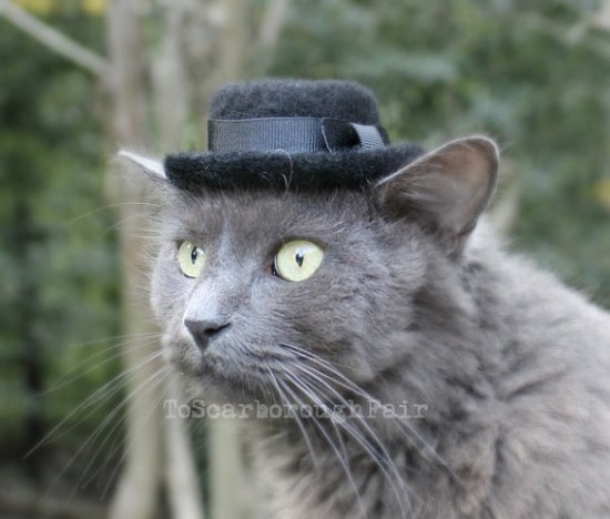 A Heisenberg Hat For Cats