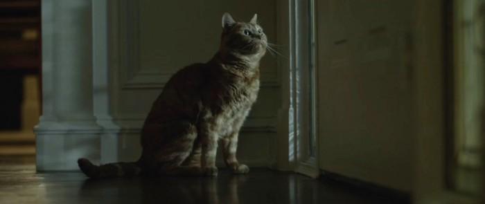 Gone Girl cat