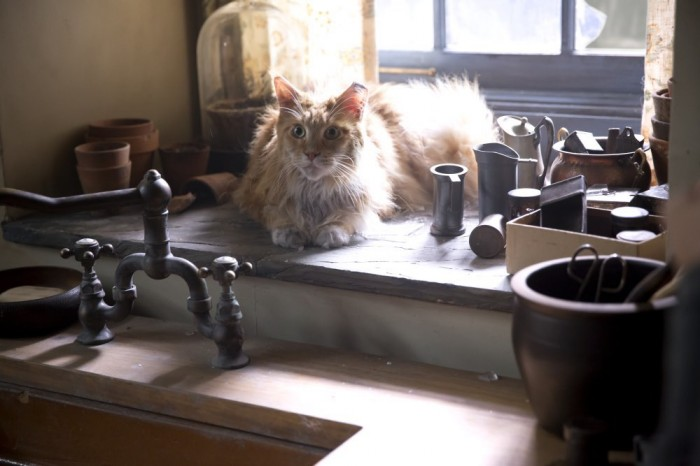 Buttercup the cat from Hunger Games: Mockingjay Part 1