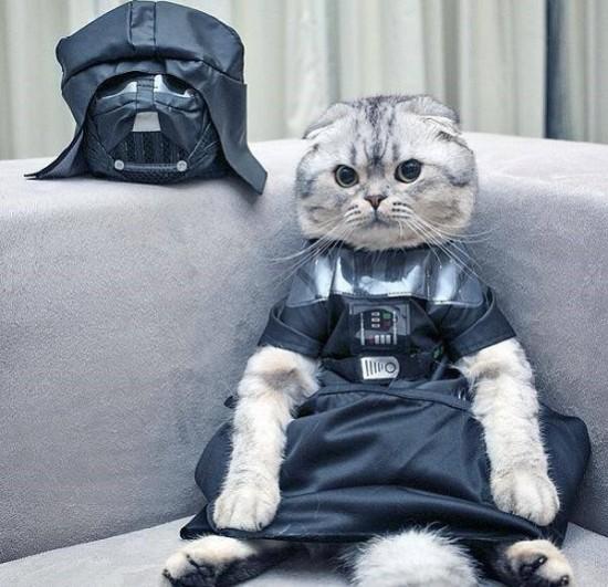 Kitty Vader