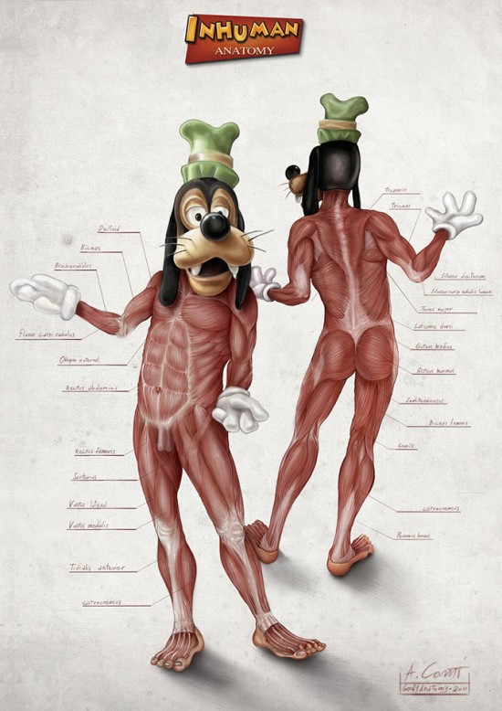 Illustrated Anatomy of Popular Disney Characters