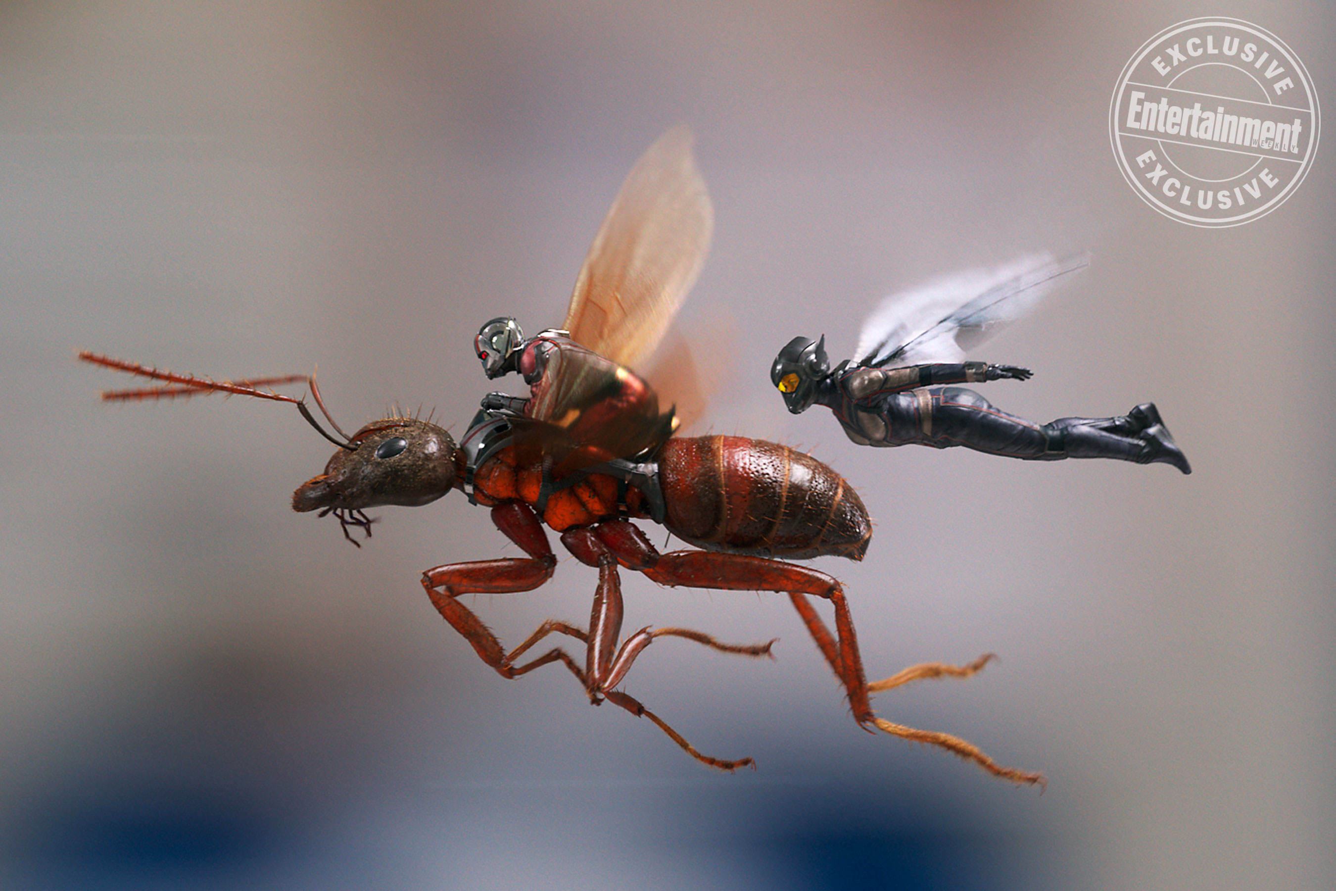 The Ant Man And The Wasp