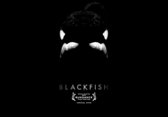 blackfish-trailer-header