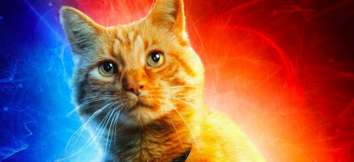 Everything We Know About Goose, the 'Captain Marvel' Cat Everyone Loves