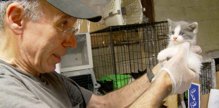 The Cat Rescuers Trailer