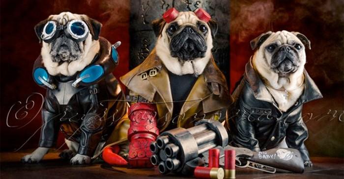 hellboy-pugs