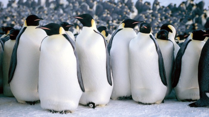 'MARCH OF THE PENGUINS' FILM - 2005